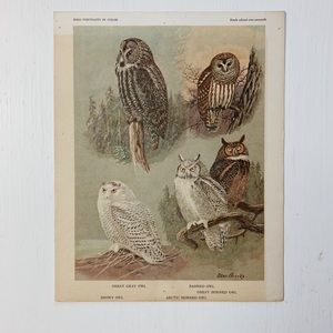 Vintage • Great gray owl bird print • wall art